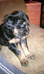 Black and tan girl available